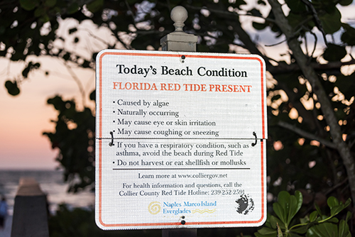 Naples, USA - April 29, 2018: Florida pink, red and orange sunset in gulf of Mexico with sign for red tide dead fish algae bloom warning