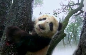 Drop-in series: Virtual reality course brings Asia to students