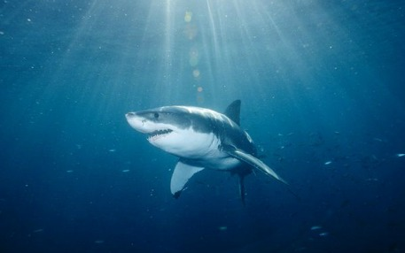 Fear of sharks helps preserve balance in the world's oceans