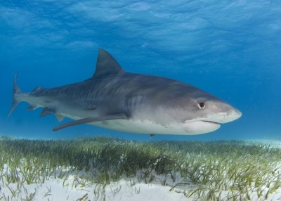 Marine predators take bite out of climate change