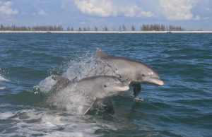 Mercury contamination found in Everglades dolphins
