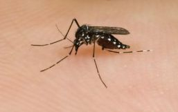 5 things you need to know about West Nile virus